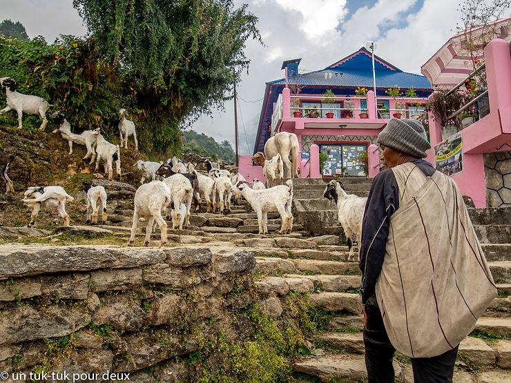 Le bonheur est-il dans les Annapurnas ? Récit de notre trek de six jours.