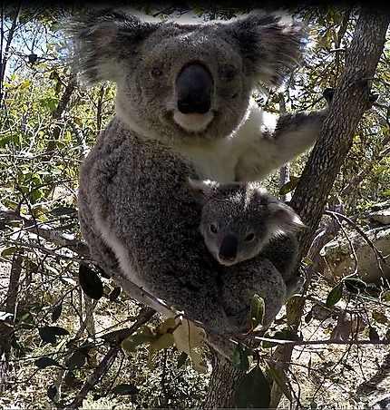 Maman et Joey