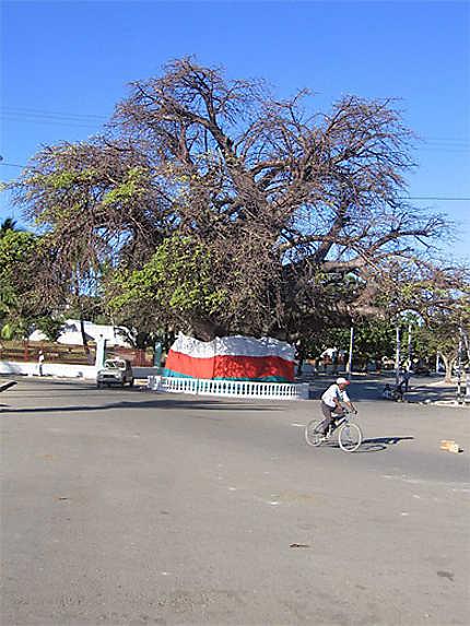Le baobab centenaire de Majunga