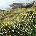 Côte de Merrien