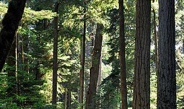 MacMillan Provincial Park (Île de Vancouver)