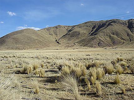 Haut-plateau péruvien