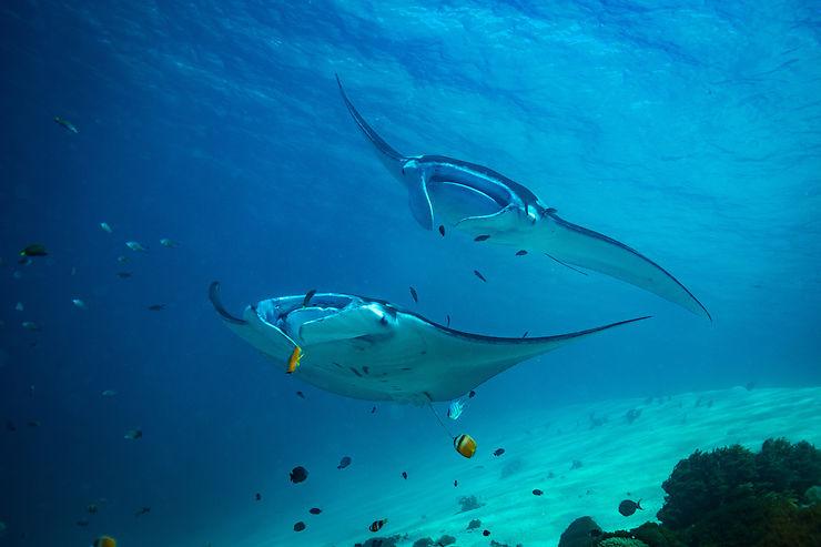 Plongée, snorkeling, plages et panoramas superbes