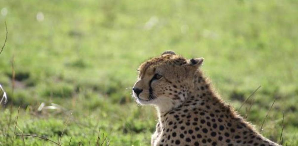 Retour sur notre voyage au Kenya