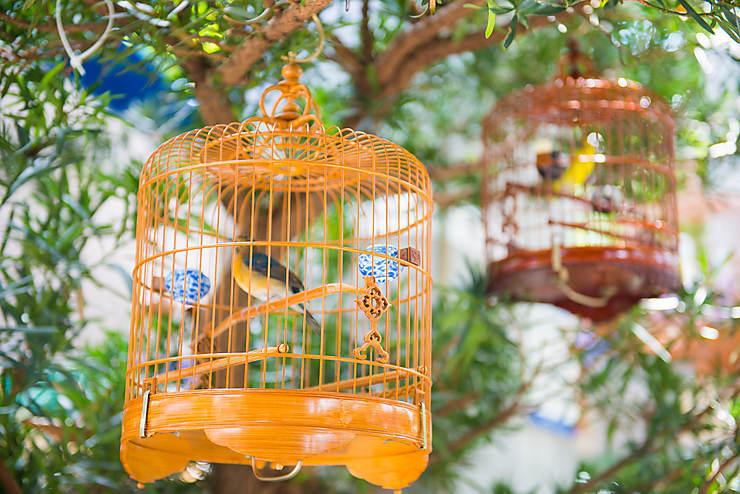 Mongkok : les marchés aux oiseaux et aux fleurs