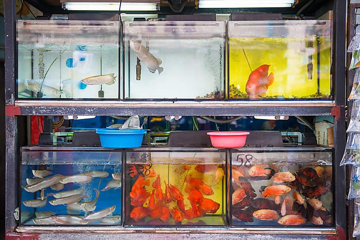 Mongkok : le Goldfish Market, aquatique et photogénique