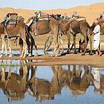 Nuitée dans le désert