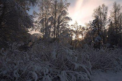 Lumière et forêt