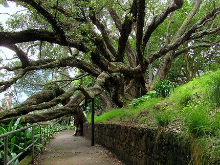Arbres majestueux du Parc Albert à Auckland