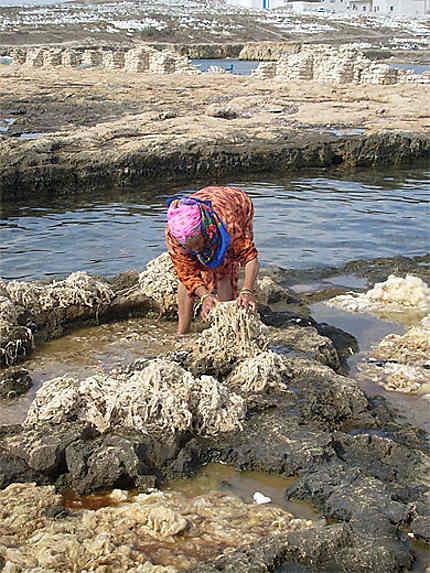 Femme lavant la laine