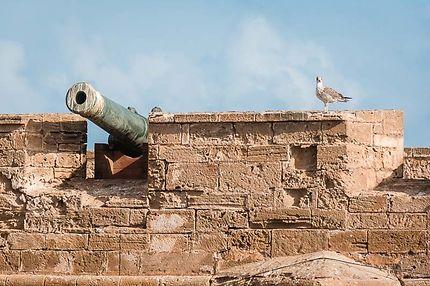 Essaouira, Sqala du port, Le canon et la mouette