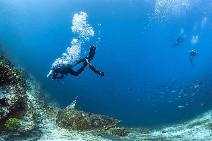 Les Galápagos, paradis de la plongée
