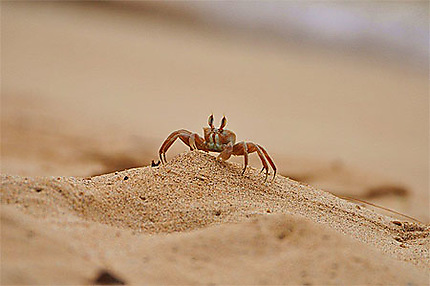 Le roi de la plage!