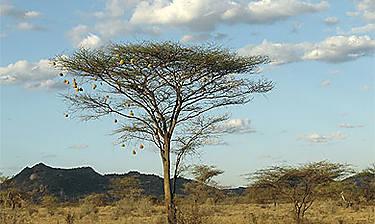 Réserve de Samburu