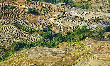 Yuanyang (Yunnan)