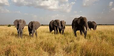 Objectif Safaris – 8j Tanzanie