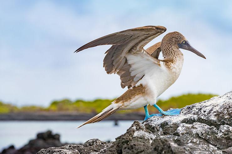 La faune endémique des Galápagos