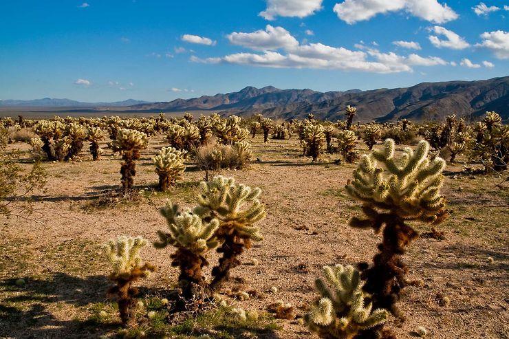 Le désert de Mojave et l'Arizona, États-Unis