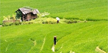 Mosaïque du Viêtnam– 19j