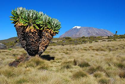 Tanzanie, à l'ombre du Kilimandjaro
