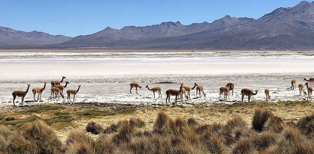 Retour sur mon séjour au Chili et Île de Pâques fin novembre à mi décembre