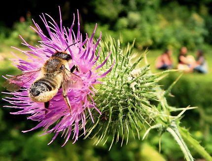 L'abeille du square des Batignolles