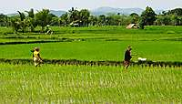 Lombok, la discrète