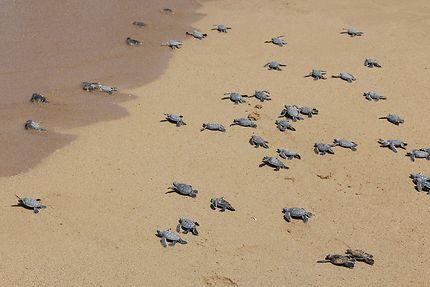 Plage aux tortues