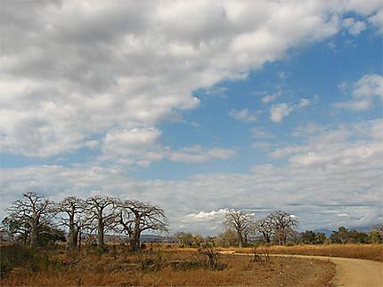 Matinée safari