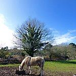 Chevaux de Bretagne