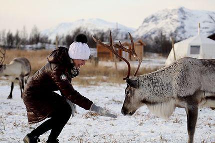 Rencontre avec un renne au nord de Tromso