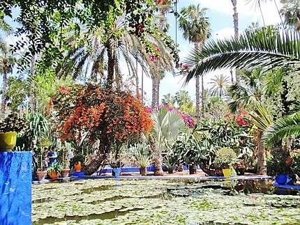 Jardin de Majorelle à Marrakech