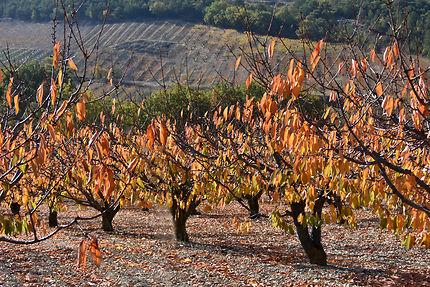 Vergers en automne