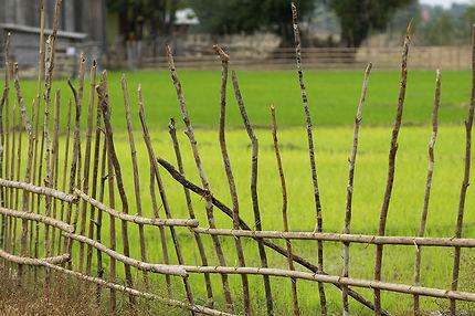 Clôture de champ à Don Khong