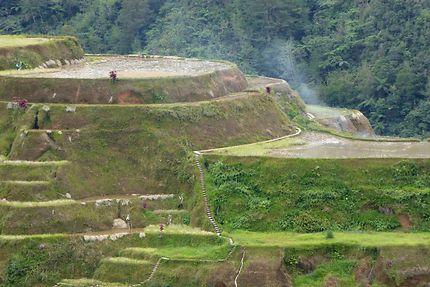 Rizières à Banaue, Philippines