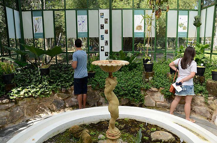 Flâner du côté de Jardim Botânico et de Lagoa