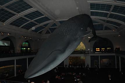 La Baleine du Museum