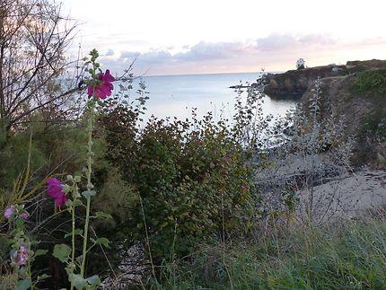 Quelques roses trémières du Finistère
