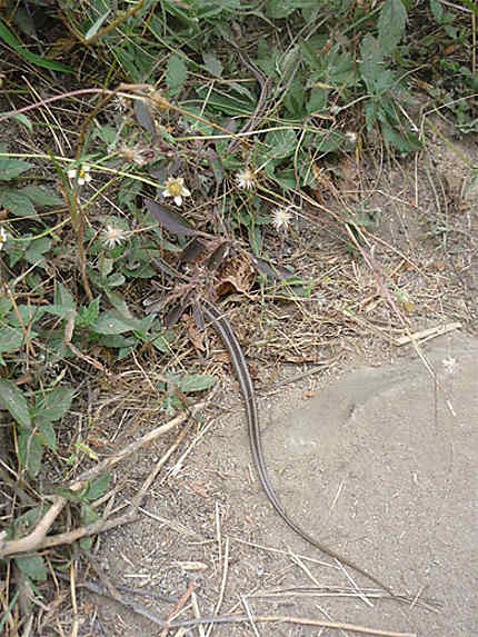 Serpent en vue