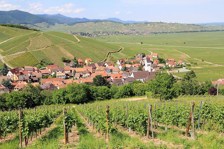 Alsace : expériences insolites sur la Route des Vins