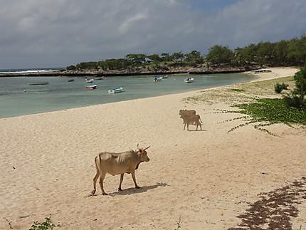 Île Rodrigues insolite