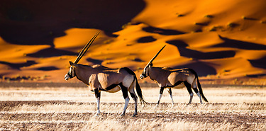 Safari en Namibie : Du Kalahari à Sossusvlei