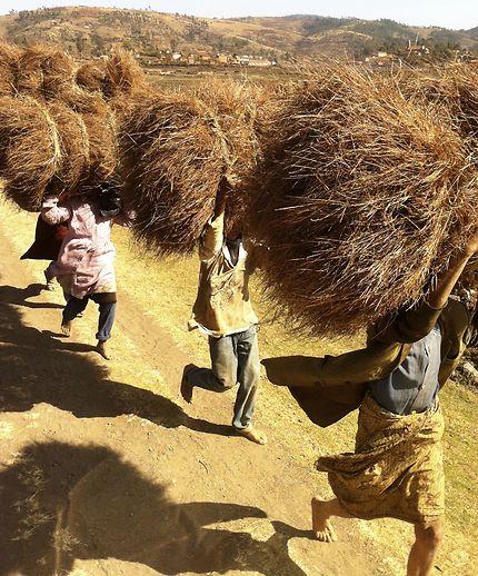 Sur la route mandarine... Madagascar