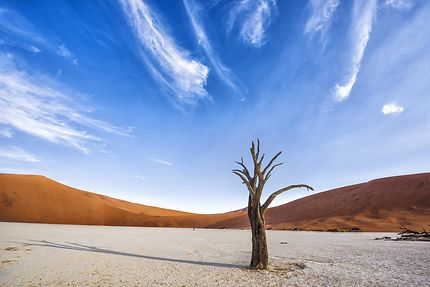 Acacia pétrifié