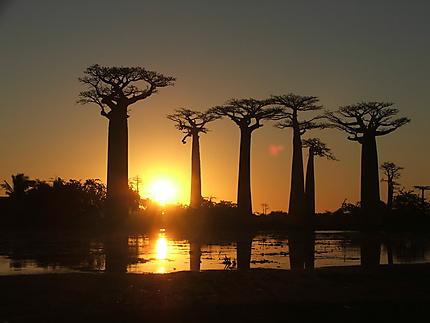 Baobabs à Madagascar