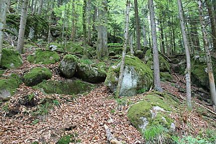 La forêt à Triberg