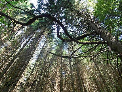 A l'ombre de la forêt