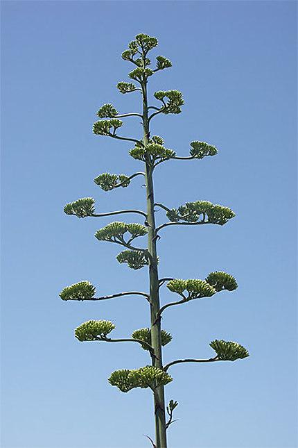 Arbuste typique