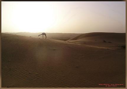 Trek en Mauritanie