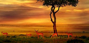 Safari en Afrique du Sud : Les traces du Mopani
